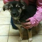 Osita, Mischling, 6 Monate