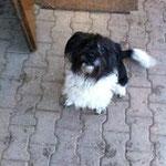 Robbie, Mischling, 6 Jahre
