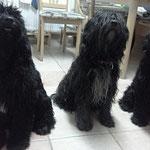Beau, Lucie, Bailey
