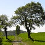 Du côté de Gaillac-Toulza