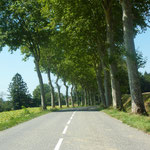 Sur la route de Gaillac-Toulza
