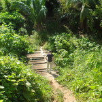 Promenade dans la jungle