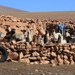 Elevage lama Quetena Grande