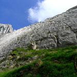 Klettergarten Laub