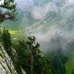 Alp Laub