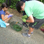 découverte des plantes sauvages