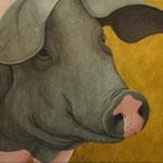 Schwäbisch-Hällisches Landschwein, Öl auf Leinwand, 50 x 50 cm