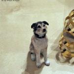 """1:12 DOG """"LUPO"""""""