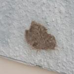 外壁の劣化の修正