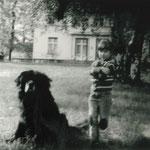 Treuer und großer Hund des Hauses.