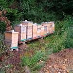 Bienen am neuem Standplatz