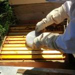 Ameisensäureverdunster kommt auf das Bienenvolk