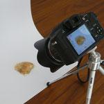 Muscheln fotografieren mit Ministativ und Kamera