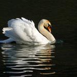 Fotos am Wichelsee