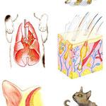 ペットライフ社発行 月刊「Cats」