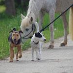Für einen kleinen Spaziergang mit ihren zwei und vierbeinigen Freunden....