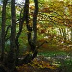 Gresse en Vercors - Automne - Sous Bois (www.gressedolomites.fr)