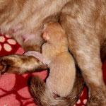 Morgens um 7:30 Uhr wurden vom schreien, des ersten Kittens wach!