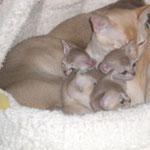 Hier passen 4 Erwachsene und 7 Kitten rein.