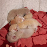 Nachmittags können sich dann 5 Kitten zusammenkuscheln!