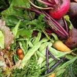 maitre-mobil`s Gartenvielfalt im Juli