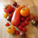 Acht verschiedene, aromatische Tomatensorten bereichern jedes Buffet