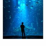 person, ocean, blue