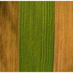 monoculture agriculture III