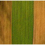 monoculture agriculture III