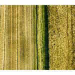 colour fields painting VI