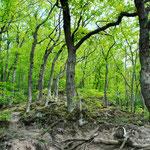 ...und frühlingshafte Zauberwälder!