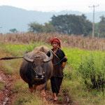 Auf dem Weg zur Arbeit- Kalaw - Myanmar