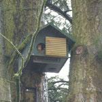 """Eichhörnchen im künstlichen """"Kobel"""""""