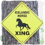 Alle Zeichen stehen auf Islandpferd