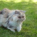 24.05.2010 - auf der Pirsch im Garten
