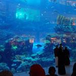 ...inkl. Aquarium