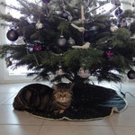 Merry Chrismas:-))