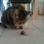 Deine erste Maus.....