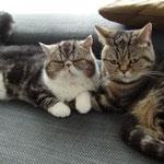 Remy & Pippa