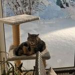 Trotz Kälte - 2015 im Wintergarten etwas Sonne tanken
