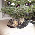 Der Tannenbaum - das Highlight des Jahres