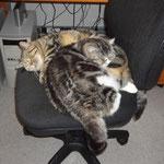 Auch im Büro lässt es sich gut schlafen