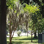 "Forsyth Park im ""Historic District"""