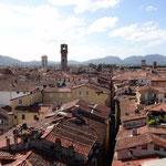 Ausblick vom Torre Guinigi (41 m)
