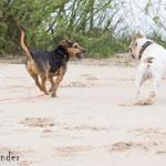 Gassiservice_Reinbek_Barsbüttel_kleine Hunde