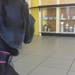The visit to the vet..