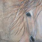 paard for sale