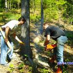 Umschneiden des ausgesuchten Baumes