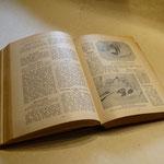 Reparatur des alten Buchblocks