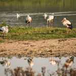 paradise for water birds